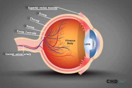 Human Eye Structure: Eye Anatomy Explained Infographic