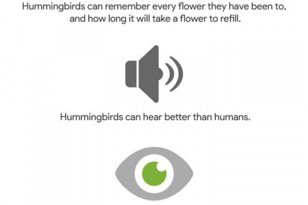 Hummingbird Algorithm Update What we Know Infographic