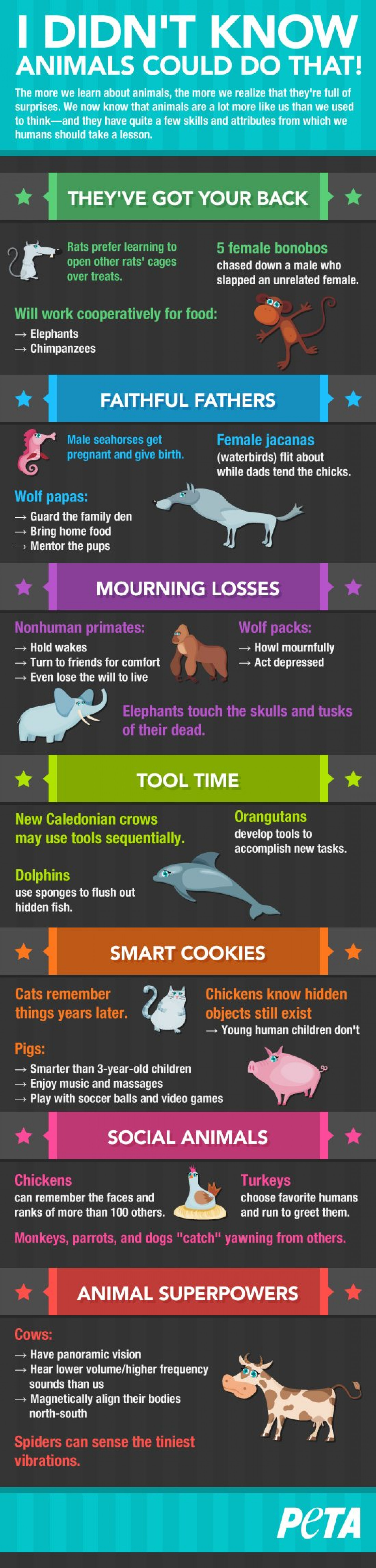 I Didn't Know Animals Could Do That! Infographic