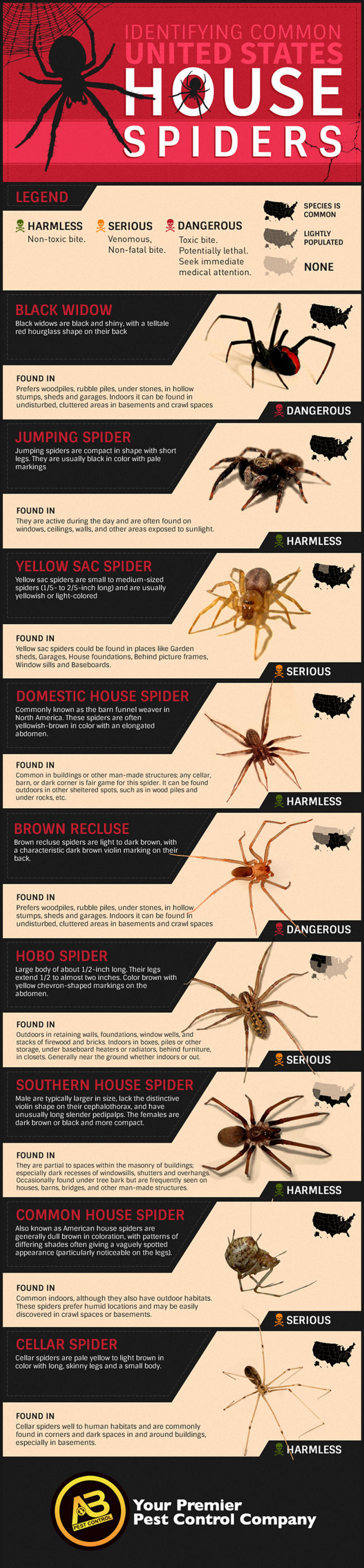 Identifying Common U.S. House Spiders | Visual.ly