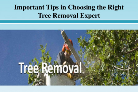 Important Tips in Choosing the Right Tree Removal Expert Infographic