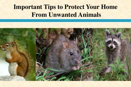 Important Tips to Protect Your Home From Unwanted Animals Infographic