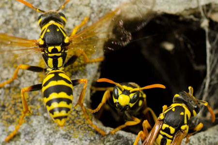 Important Tips to Remove Wasps From Your Home Infographic