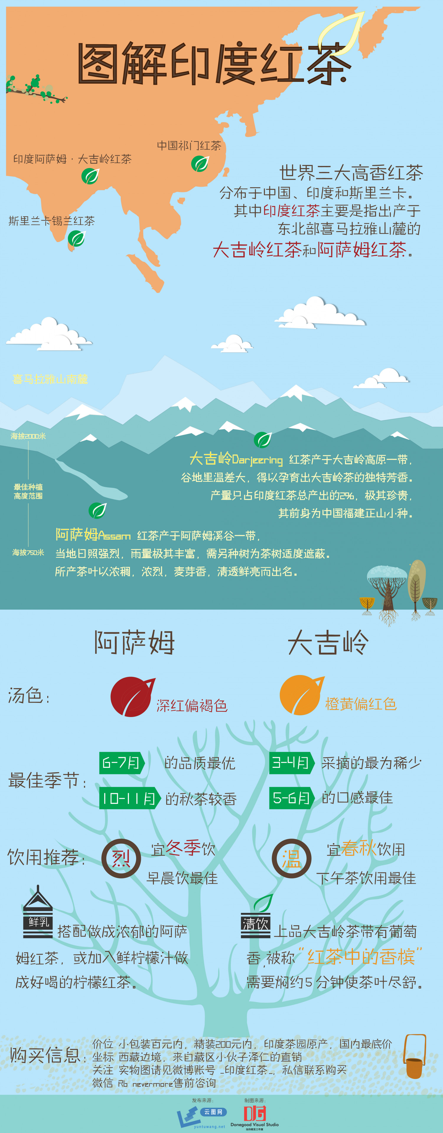 图解印度红茶( India black tea) Infographic