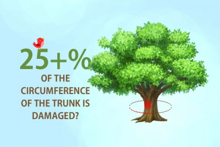 Infographic about removal of trees services Infographic