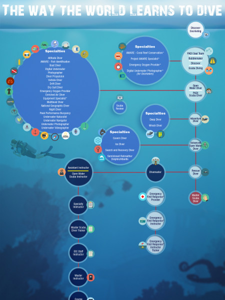 The Way The World Learns to Dive Infographic