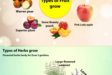 Information about Zone 5 planting Infographic