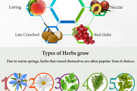 Information about Zone 6 planting Infographic