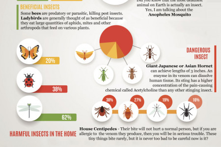 Insects Information Infographic