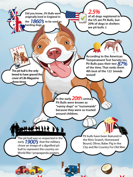 Pitbull Facts Infographic