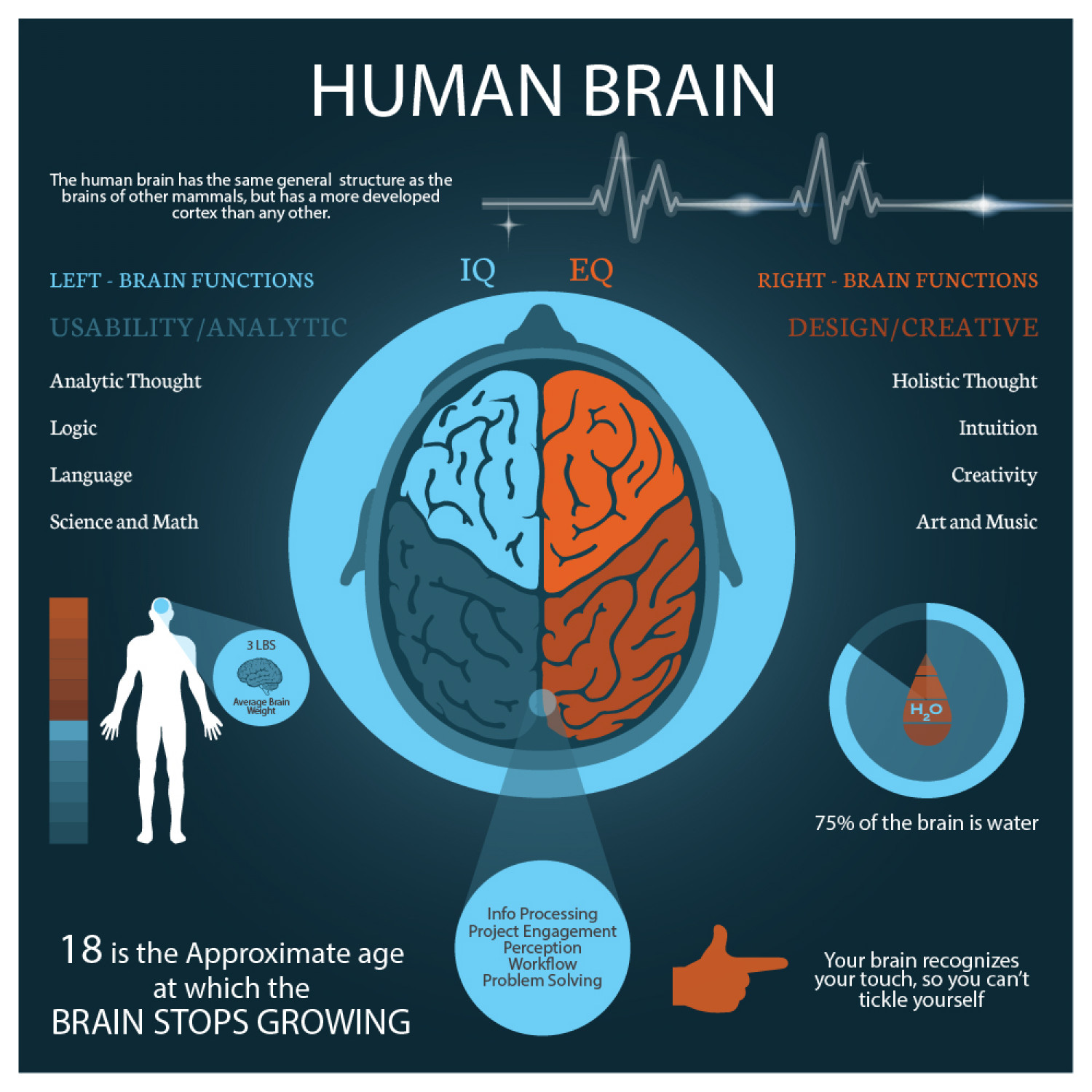 Interesting facts about the brain Infographic