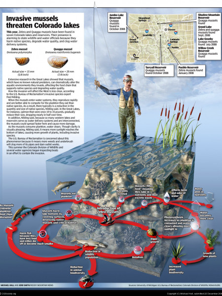 Invasive Mussels Threaten Colorado Lakes Infographic