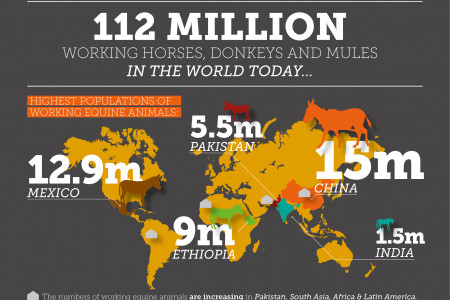 Invisible Workers: The impact working horses, donkeys and mules have on livelihoods Infographic