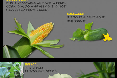 Is it a Fruit or a Vegetable? Infographic