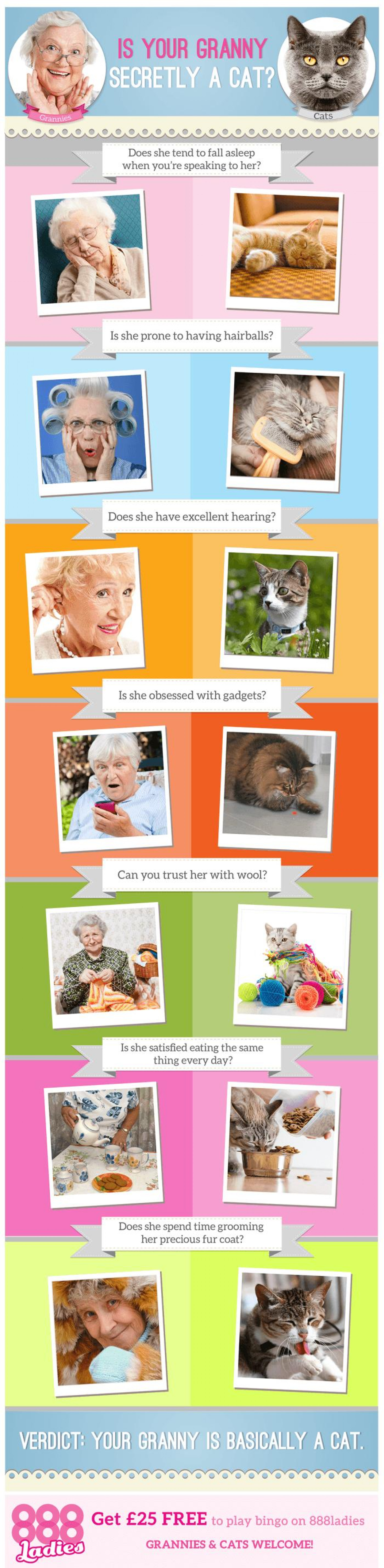 Is Your Granny Secretly a Cat? Infographic