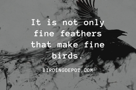It is not only fine feathers that make fine birds Infographic