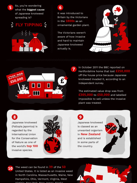 Japanese Knotweed Infographic