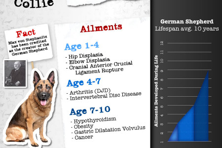 Joint Pain and Other Diseases in Large Dog Breeds Infographic