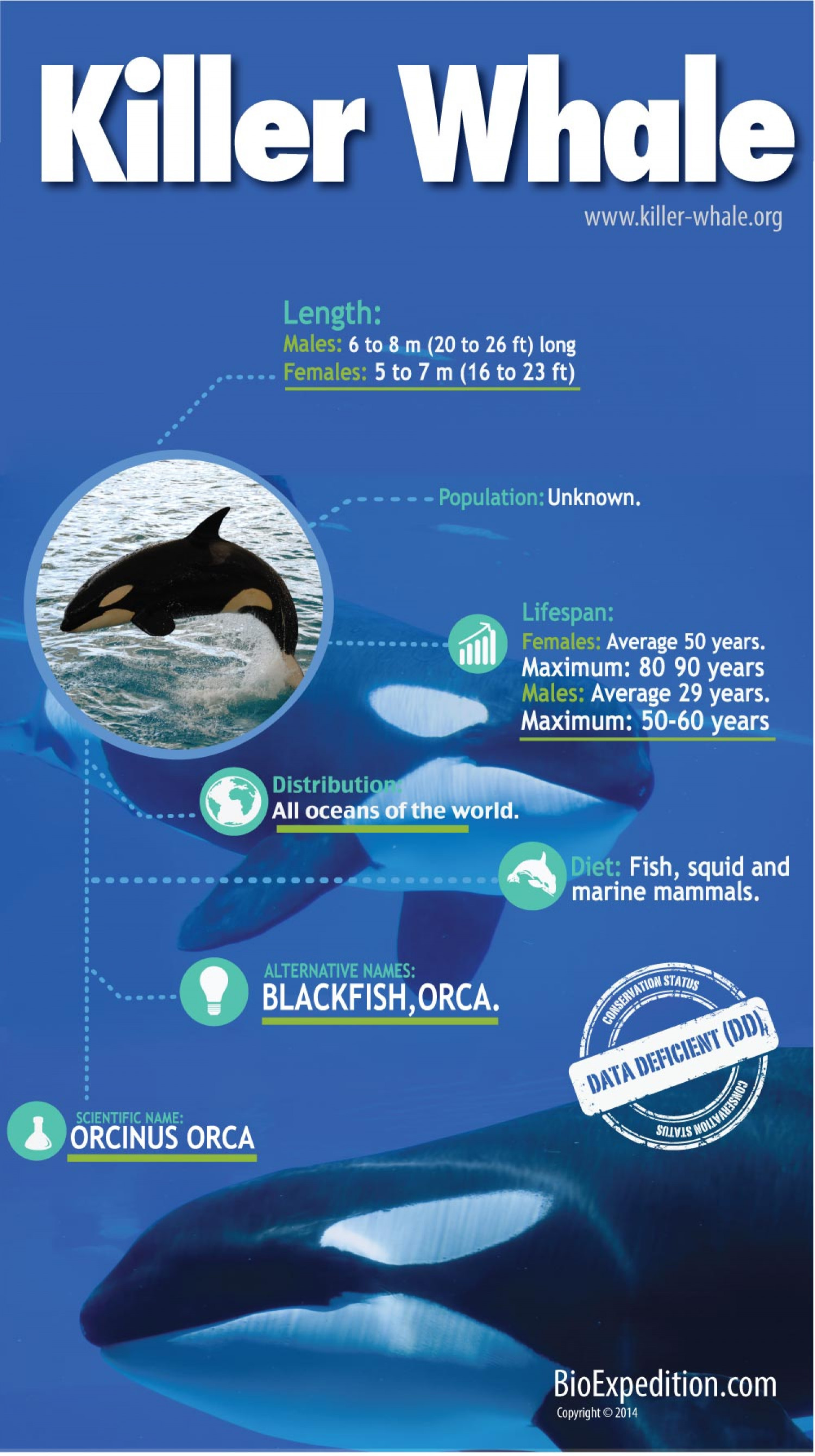 Killer Whale Infographic