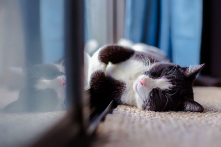 Landlords Urged to Rethink no Pets Policies Infographic