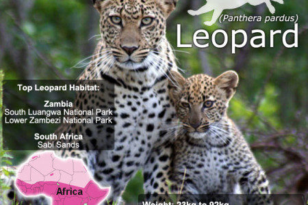 Leopard SnapFacts Infographic