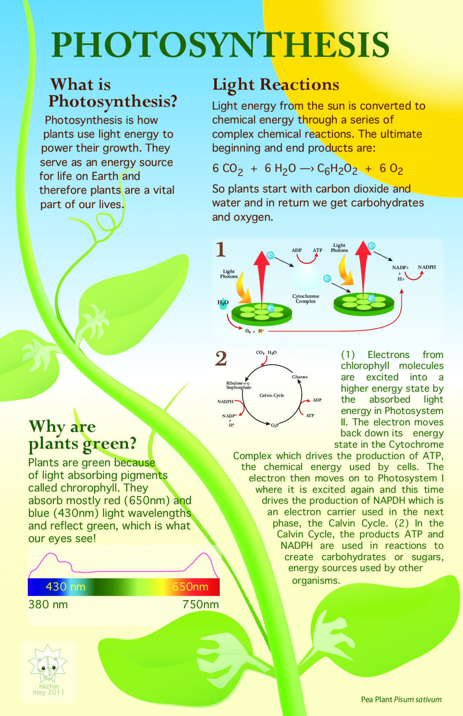 219 best 3 energy states of photosynthesis