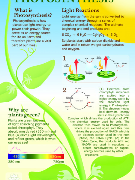 Photosynthesis  Infographic