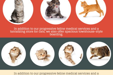 Luxury Cat Boarding Services in Palm Beach County Infographic