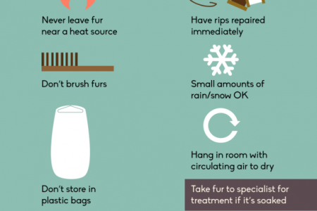 Maintenance Tips for Fantastic Furs Infographic
