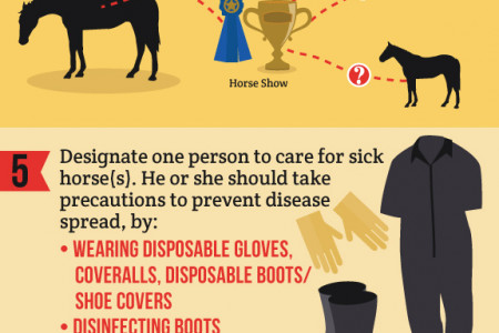 Managing a Horse Disease Outbreak  Infographic