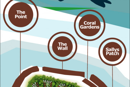 Marine Life to be Spot while Snorkeling Infographic