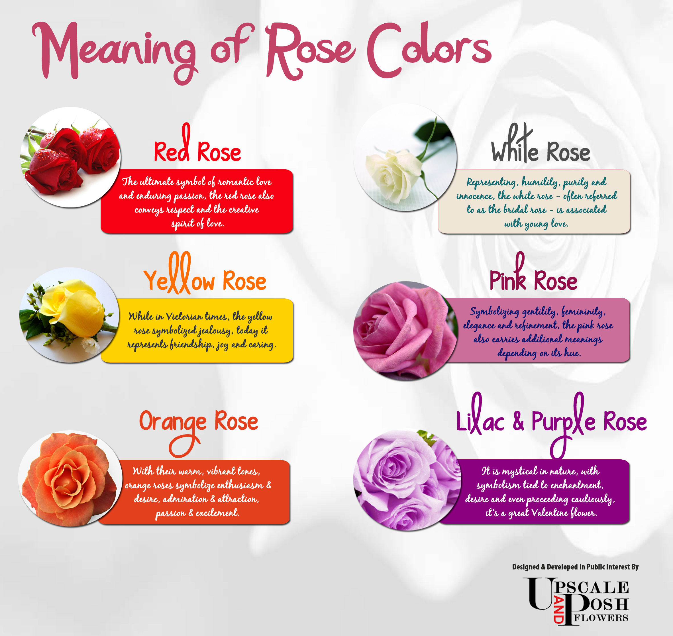Roses meaning fli for What colors make rose