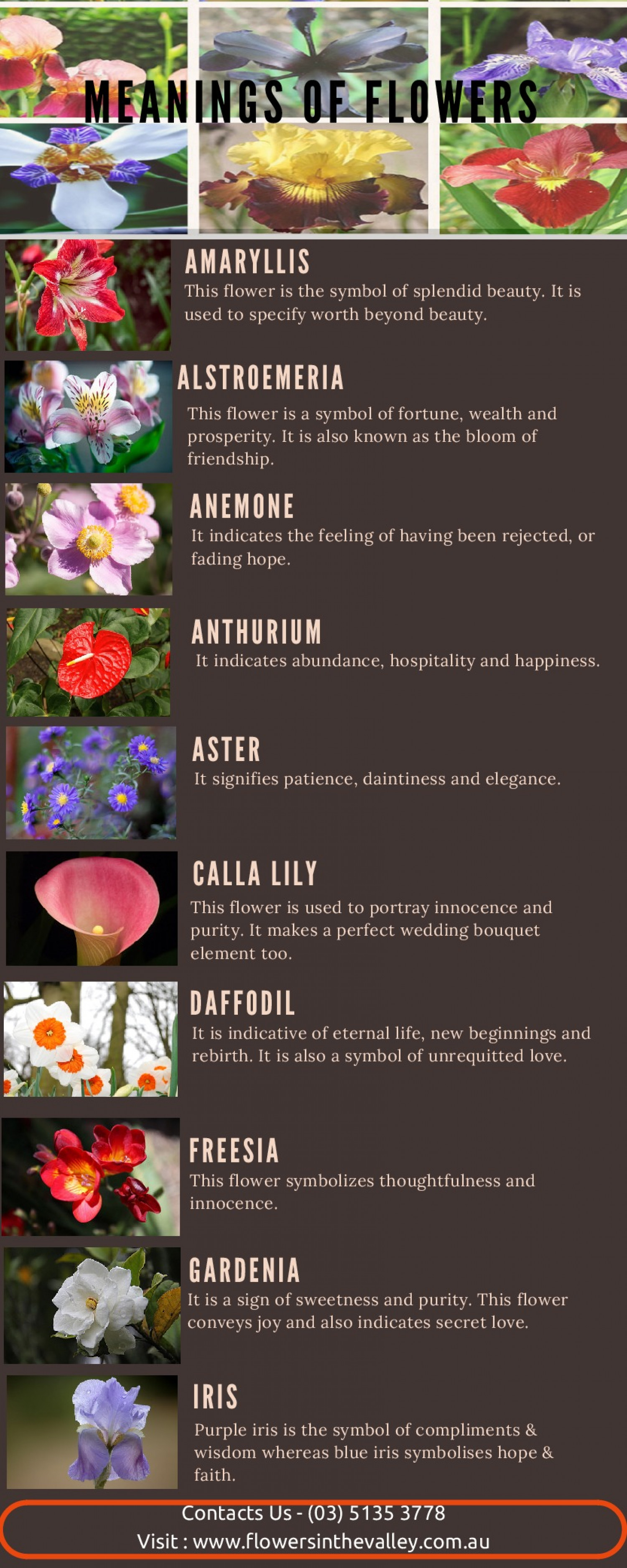 Meanings Flowers
