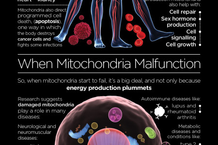 Meet your Mitochondria Infographic