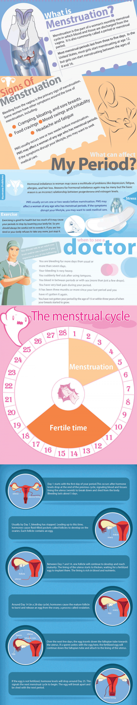 Menstruation and the Menstrual Cycle (Infographic)