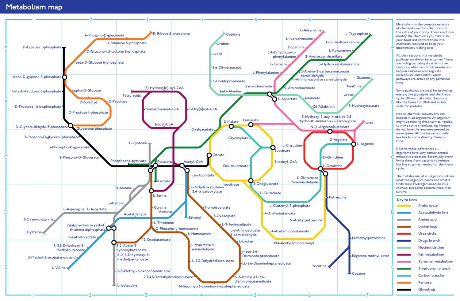 Metabolism Map Infographic