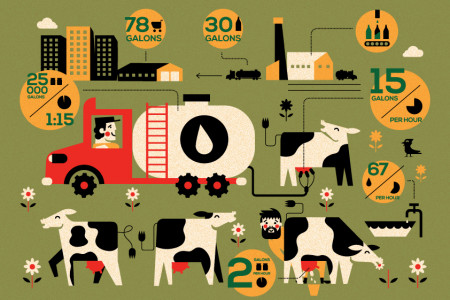 Milk process Infographic