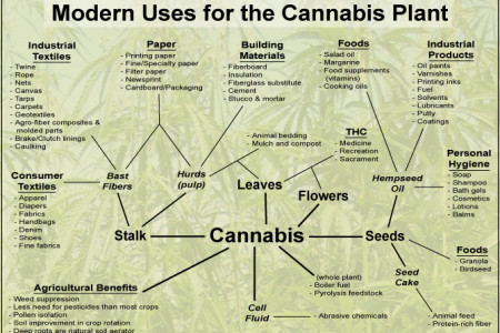 Modern Uses for the Cannabis Plant  Infographic