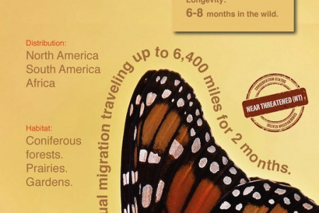 Monarch Butterfly Infographic