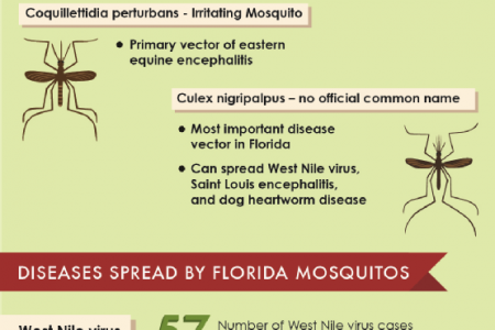 Mosquitos Of Miami And The Diseases They Spread Infographic