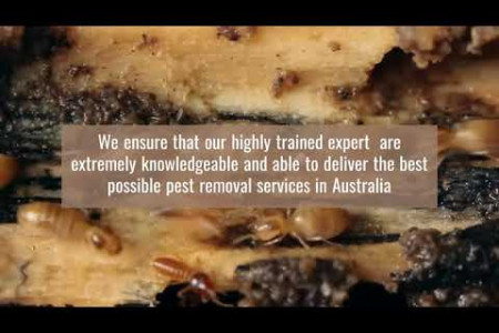 Most Perfect and  Knowledgeable Termite Expert Picton Infographic
