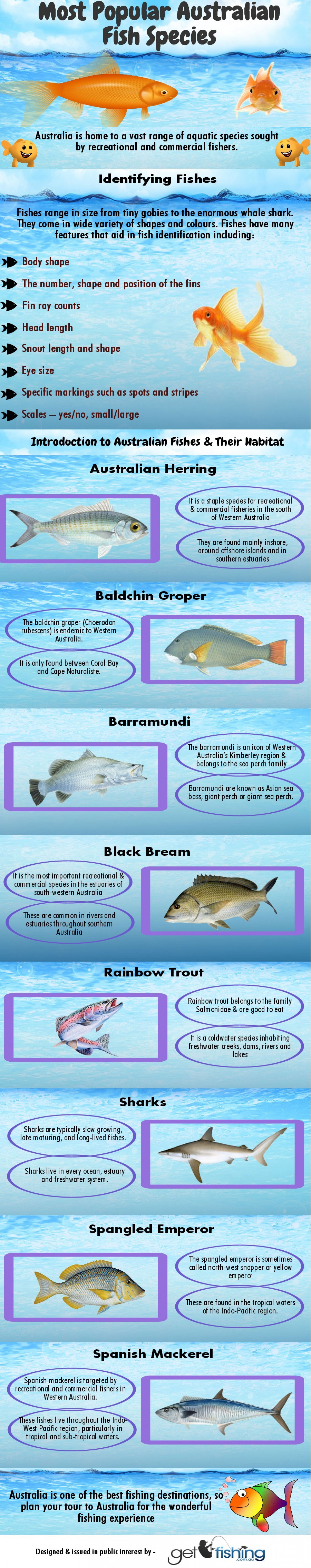 Most Popular Australian Fish Species Infographic