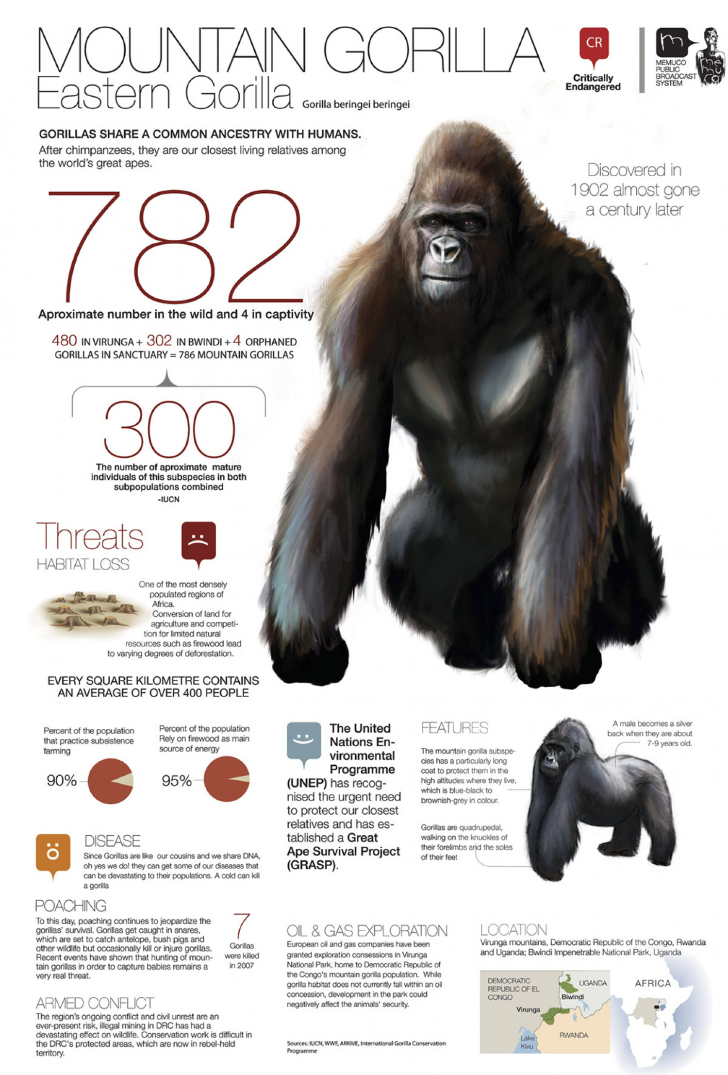 Mountain Gorilla Infographic