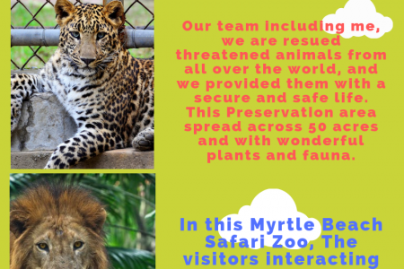 Myrtle Beach Safari Zoo is one of the Best Destination for a Wildlife Experience Infographic