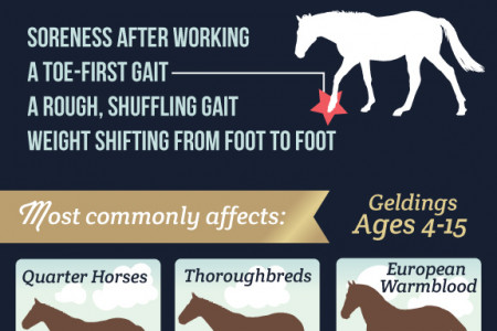 Navicular Disease in Horses Infographic