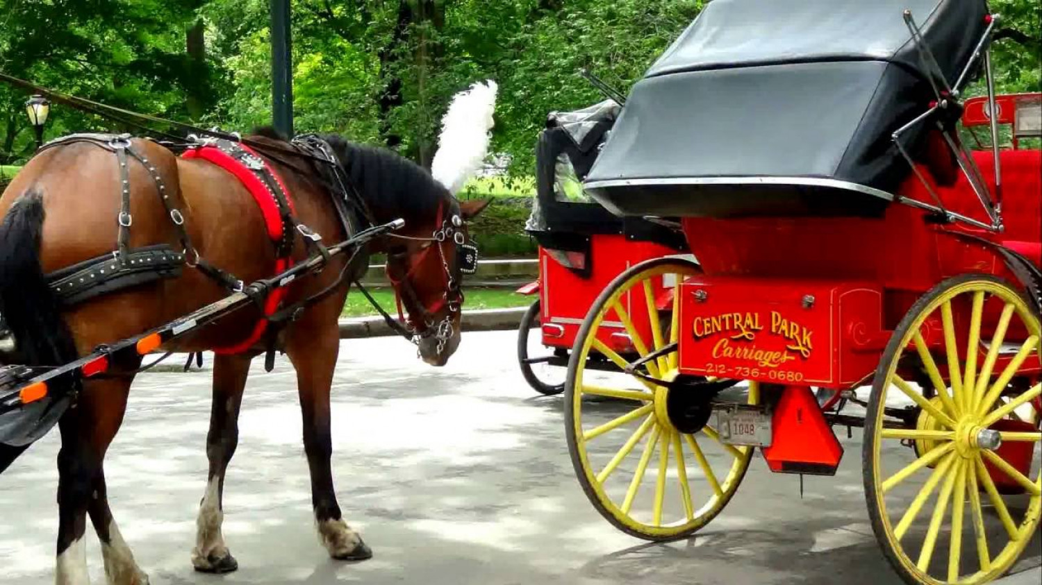 New York City Horse Carriage Rides Infographic