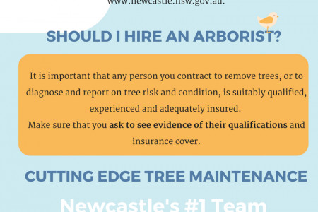 Newcastle Tree Removal Guidelines Infographic
