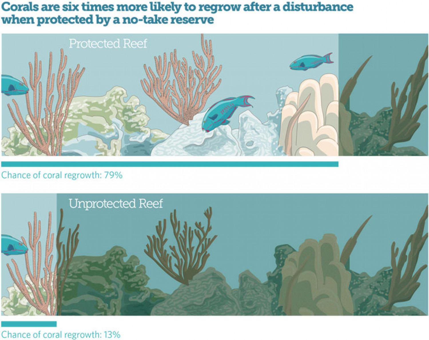 No-Take Marine Reserves Protect Coral from Climate Change Infographic