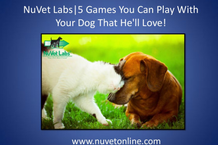 NuVet Labs   5 Games You Can Play With Your Dog That He'll Love! Infographic
