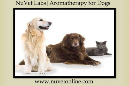 NuVet Labs   Aromatherapy for Dogs Infographic